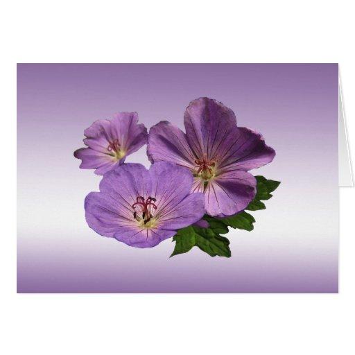 El geranio púrpura florece cumpleaños tarjeta de felicitación