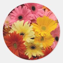 El Gerbera colorido florece al pegatina
