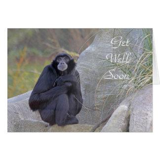 El Gibbon consigue pronto la tarjeta bien