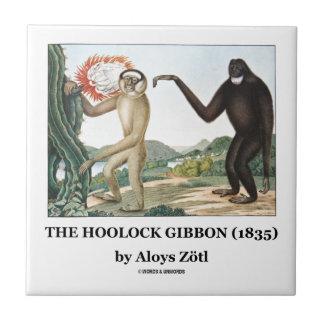 El Gibbon de Hoolock (1835) por Aloys Zotl Teja Ceramica