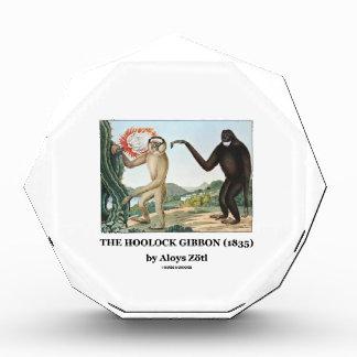 El Gibbon de Hoolock (1835) por Aloys Zotl