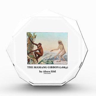 El Gibbon de Siamang (1883) por Aloys Zotl