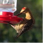 El Gila piensa que es un colibrí Esculturas Fotograficas