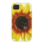 El girasol amarillo-naranja con manosea la abeja y iPhone 4/4S funda
