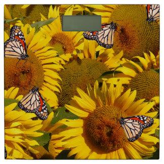 El girasol de la mariposa de monarca florece báscula