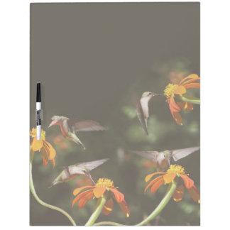 El girasol de los pájaros del colibrí florece el pizarras blancas