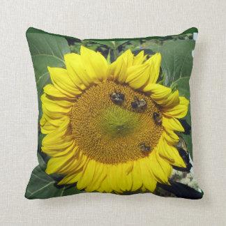 El girasol manosea la almohada de la abeja