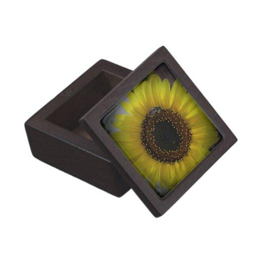 El girasol manosea la caja de regalo del premio de caja de recuerdo de calidad