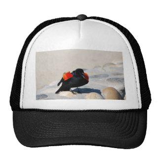 El gojear negro del pájaro gorros bordados
