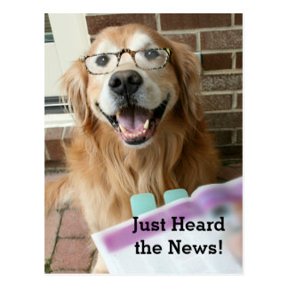 El golden retriever acaba de oír las noticias postales