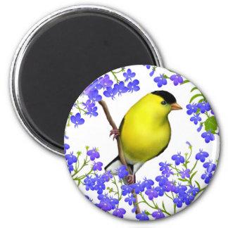 El Goldfinch americano masculino en Lobelia Imán Redondo 5 Cm