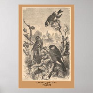 El Goldfinch, eurasiático Siskin, Peony del Póster