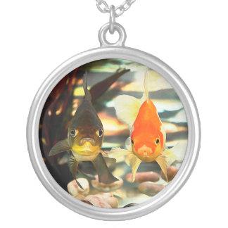 El Goldfish de lujo hace frente a imagen de la Colgante Redondo