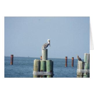 El golfo apuntala, pelícano de Alabama en la tarje Tarjeta Pequeña