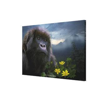 El gorila de montaña en peligro dio derecho a arte impresiones en lona