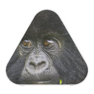 El gorila de montaña juvenil alimenta en las hojas altavoz bluetooth