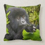 El gorila de montaña juvenil alimenta en las hojas cojines