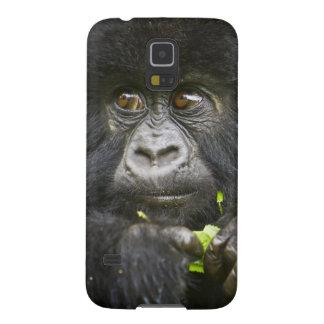El gorila de montaña juvenil alimenta en las hojas carcasa para galaxy s5