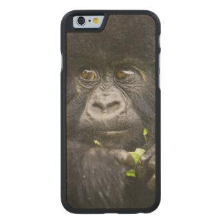 El gorila de montaña juvenil alimenta en las hojas funda de iPhone 6 carved® de arce