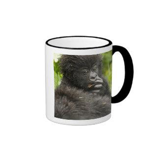 El gorila de montaña, montar a caballo del bebé en taza de dos colores