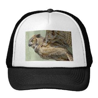 El gran búho de cuernos saca gorras