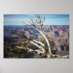 El Gran Cañón, borde del sur Impresiones