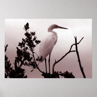 El gran Egret, llaves de la Florida Póster