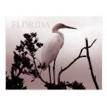 El gran Egret - llaves de la Florida Tarjetas Postales