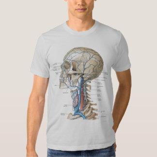 El gris de la anatomía del cráneo y de la espina poleras