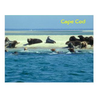 El gris sella Monomoy, Cape Cod Postal