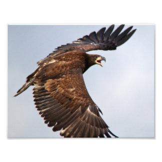 El grito de Eagle calvo me alimenta en un padre Arte Fotografico