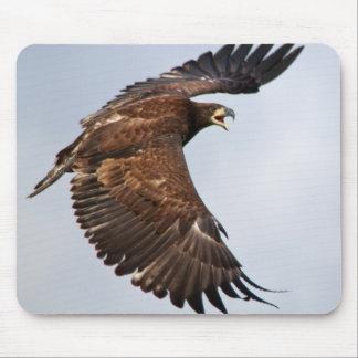El grito de Eagle calvo me alimenta Alfombrilla De Ratón