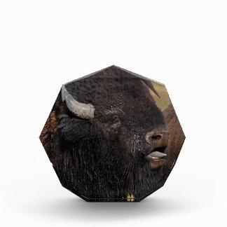 el gruñir del bisonte del toro