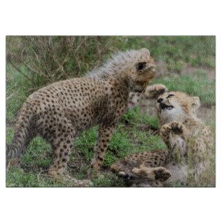 El guepardo Cubs que juega el corte del vidrio Tablas De Cortar