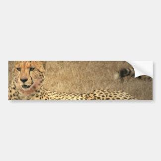 El guepardo mancha a la pegatina para el parachoqu etiqueta de parachoque