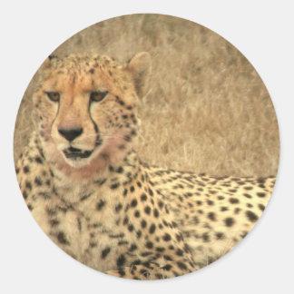 El guepardo mancha al pegatina