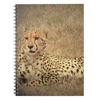 El guepardo mancha el cuaderno