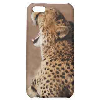El guepardo podía asustar un león