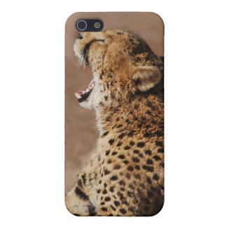 El guepardo podía asustar un león iPhone 5 coberturas