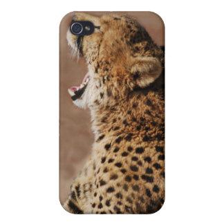 El guepardo podía asustar un león iPhone 4 carcasa