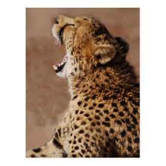 El guepardo podía asustar un león postales