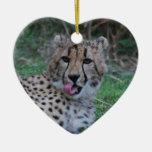 El guepardo que lame el suyo taja adornos