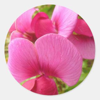 El guisante de olor eterno florece al pegatina