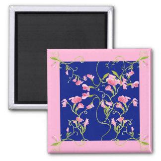 El guisante de olor florece rosa en azules marinos imán cuadrado