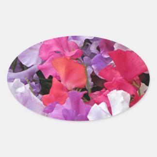 El guisante de olor rosado, púrpura y blanco calcomania de ovaladas