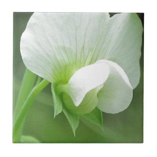 El guisante florece baldosa cerámica como caja del azulejo cuadrado pequeño