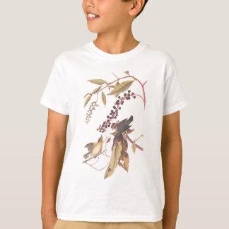 El gusano de Audubon que come la curruca Playera
