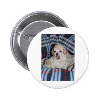 El hablar del perrito del caniche de juguete pin redondo de 2 pulgadas