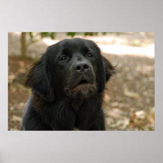 El hablar del perro de Terranova Póster