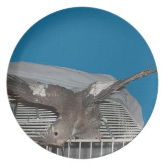 El hacer de Watcha del pájaro del mascota Plato
